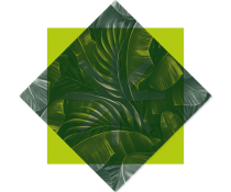 Decobulle Jungle